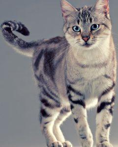 Мысли домашнего кота: - Хозяйка хахаля привела