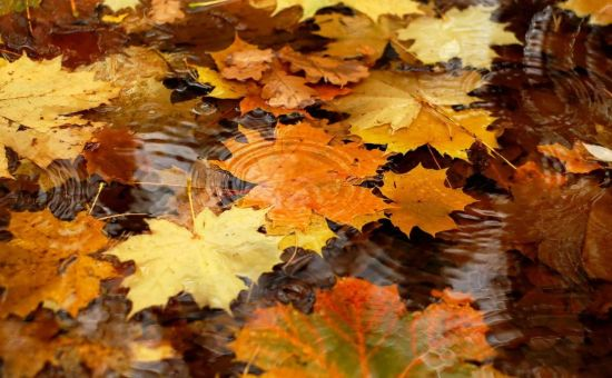 Осень — единственное время года, которое учит