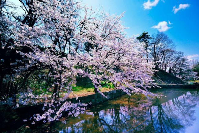 Весна в окно стучится