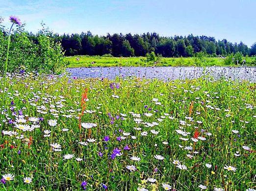 Сияет солнце, воды блещут, На всем улыбка, жизнь во всем, Деревья радостно трепещут,