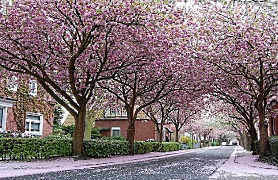 """Spring time is nature at its best."" ""Весна природа в лучшем виде."""