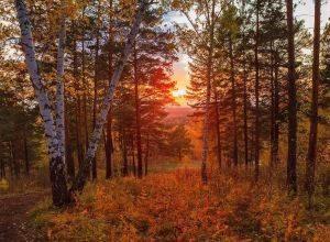 Уж знает Осень, что такой Глубокий и немой покой