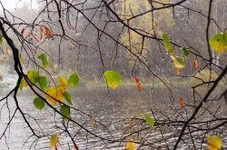 На небе солнце. Дождь и мгла Холодным дымом лес туманят, — Недаром эта ночь прошла!