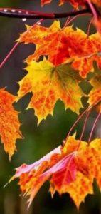 «Осенняя депрессия». Как избавиться от хандры?