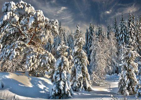 Они стояли, засыпанные снегом,