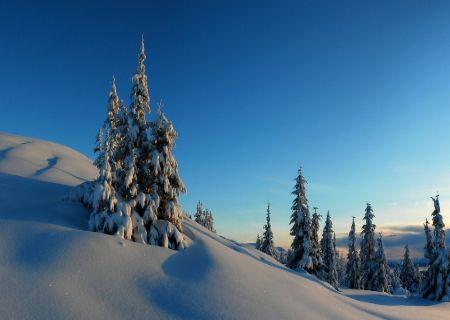 И одним цветом белым рисует зима