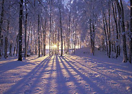 сегодня наступила дивная зимняя погода