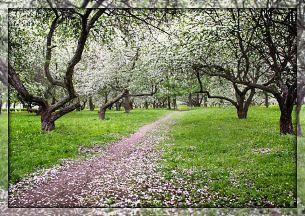 """Стих """"Желанная весна проходит"""".Автор: Николай Глазков"""