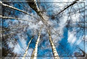 Стих «На бледно-голубой эмали…» Автор: Осип Мандельштам