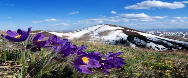 Весна была ранняя. Снег сошел с полей.