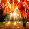Красивые слова про осень в прозе