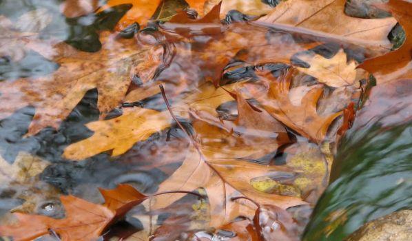 Статусы про осень красивые со смыслом