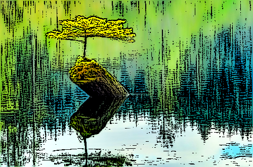 дерево на воде