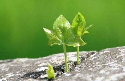 Пока ты держишься за свою «стабильность», кто-то рядом воплощает в жизнь твои мечты.