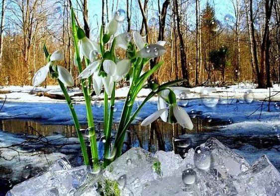 """""""Весна идёт, весна идёт!"""