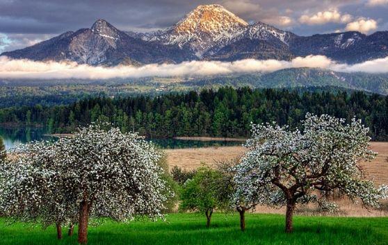 Spring is when life's alive in everything. Christina Rossetti Весна, когда жизнь живая во всем. Кристина Россетти
