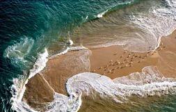 В отлива час не верь измене моря, Оно к земле воротится, любя.
