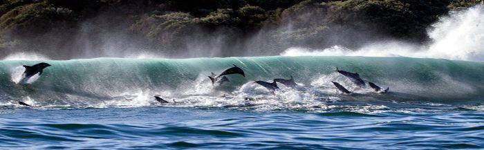 Дельфины - люди моря.