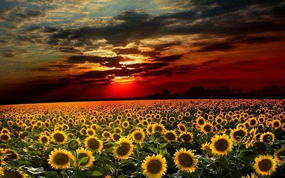 Когда я созерцаю чудеса заката или грацию моря, моя душа преклоняется в благоговении пред Творцом»