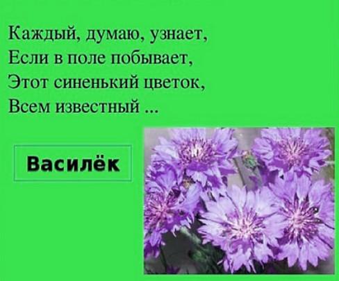 Василёк - загадки про цветы