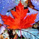 Цитаты про осень: короткие и красивые