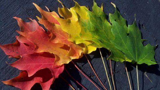 Осень связывает поэзию в свои засохшие листья.