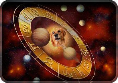 Собака, как верный друг, будет весь год стоять на страже благополучия населения Земли.