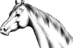 Гадание по лошади. На Рождество.