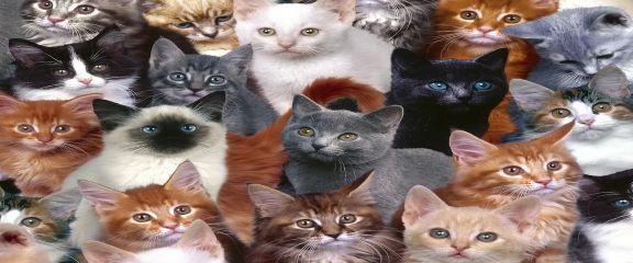 строения носа у котов и кошек