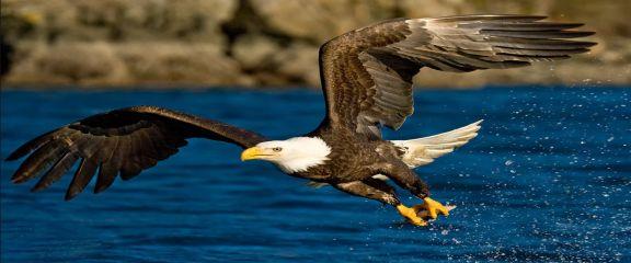 Особенности строения тела орла