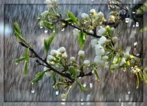 """""""Весна — это свет и в любовь окно"""""""