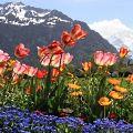 Красивые цитаты про весну