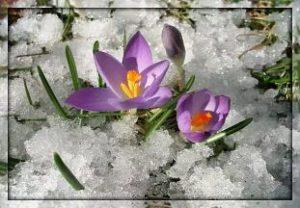 """Стих""""Весна тепло ведёт"""" Автор: Михаил Ломоносов"""