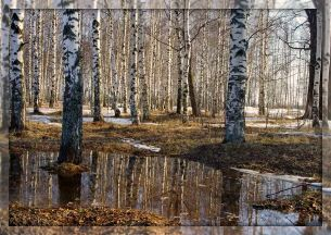 """Стих """"Весна""""Автор: Мария Михайловна Шкапская"""