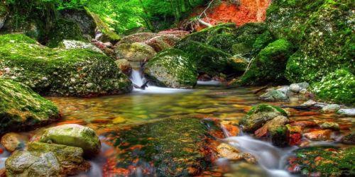 Стих «В лесу»автор: Аполлон Майков