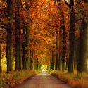 Предложения про осень