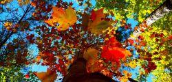 Красивые статусы про осень