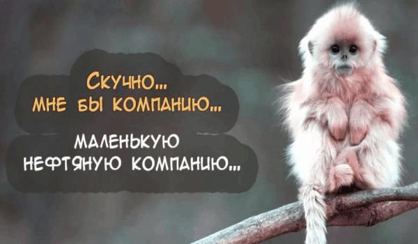 Приколы животные, веселые статусы для ватсапа в картинках