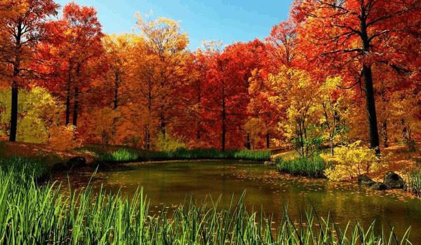 красивые цитаты со смыслом про золотую осень для инстаграма